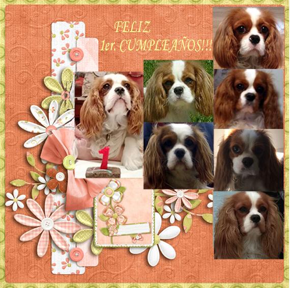 Cachorros cavalier king charles de Ozekydom.